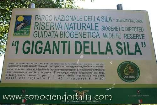 giganti_della_sila000