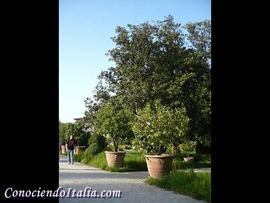 Villa Pisani: museo nacional y uno de los mejores parques de Italia